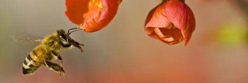 Pollinator Week: Economic impact of pollination cannot be underestimated
