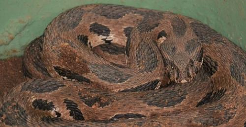 World Snake Day 2020: Unique pilot project uses telemetry to tackle snake bite problem
