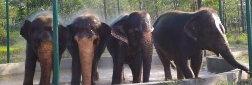 Trichy's elephant rescue centre is a haven for abused pachyderms