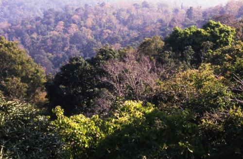 Alleviating poverty: Forests, trees can be trump card post COVID-19, says report