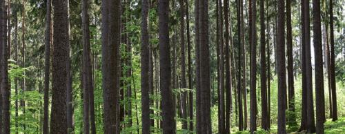 India among top 10 countries gaining forest area in the world: FAO