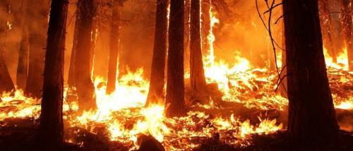 ऑस्ट्रेलिया के जंगलों में लगी आग से करीब 3 बिलियन जानवर नष्ट हुए : अध्ययन