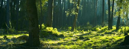 Shifting forest finance toward a rights-based REDD+