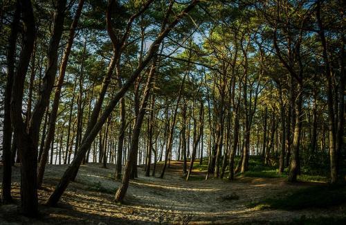 संरक्षित क्षेत्रों की 500 हेक्टेयर वनभूमि 68 परियोजनाओं को दी गई