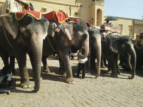 World Elephant Day: The trials of India's national heritage animal