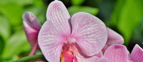 India must conserve its orchid wealth