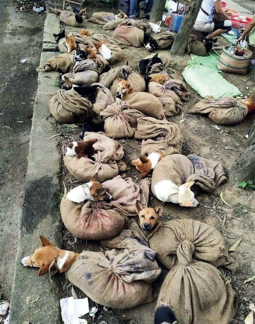 A sharp bite: Dog meat ban evokes some sharp reactions in Nagaland
