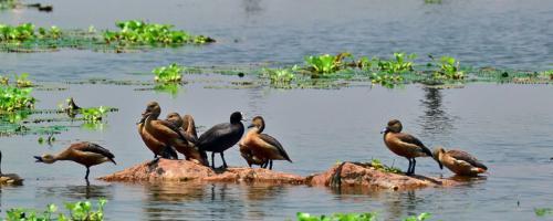 East Kolkata Wetlands: NGT warns officials for violating waste dumping norms