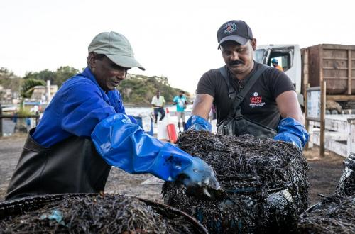 Mauritius oil spill: Potential government failures should be investigated