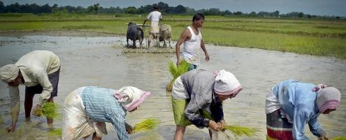 Why farmers are not cheering their exceptional feat this kharif season