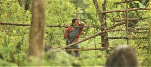Empower communities to restore forests: Study