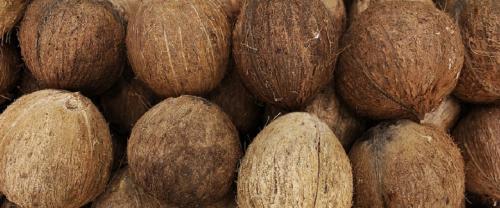 World Coconut Day: A wonder fruit that has nurtured humanity