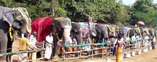 A unique rejuvenation camp in Tamil Nadu for captive elephants