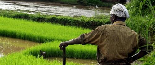 Growth in agriculture is not remunerative to Indian farmers