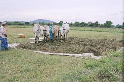 Indian states step up natural farming adoption