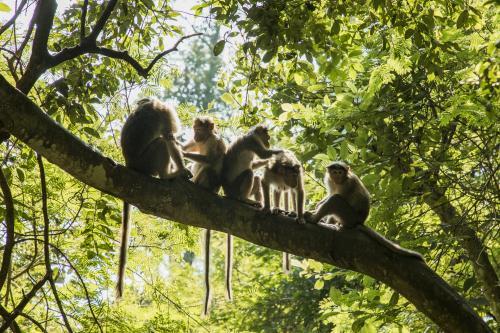 World lost 68% vertebrates in 1970-2016: WWF