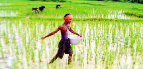 Study zeroes in on target plant hormone to improve potassium deficiency in rice