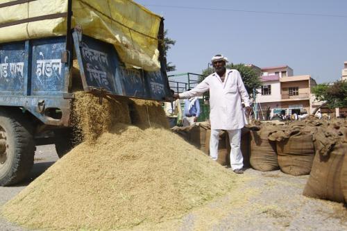 ग्राउंड रिपोर्ट: 1200 रुपए प्रति क्विंटल धान बेचने को मजबूर हुए किसान, एमएसपी है 1868 रुपए