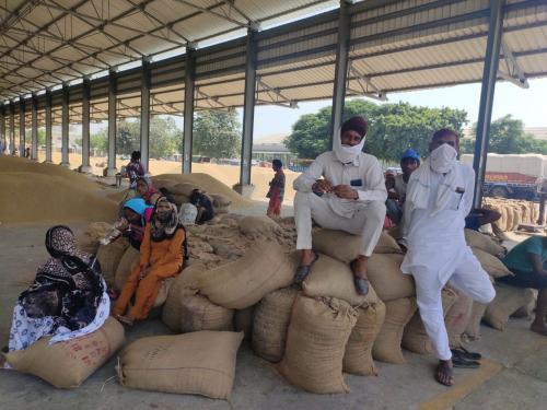 Haryana hurdle: Paddy procurement season on, but farmers have no buyers