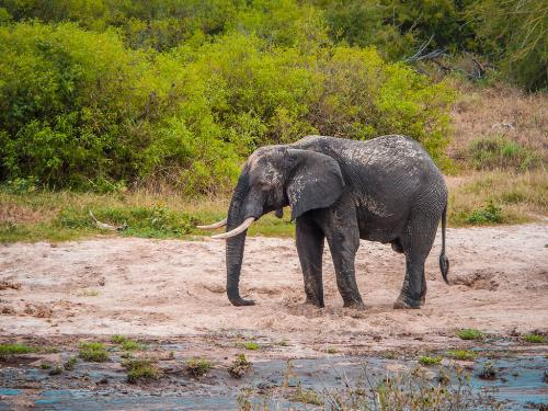 Animals wiped out: Whose fault is it?