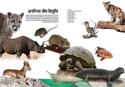 इन तस्वीरों में दिख रही प्रजातियों को हम कभी नहीं देख पाएंगे
