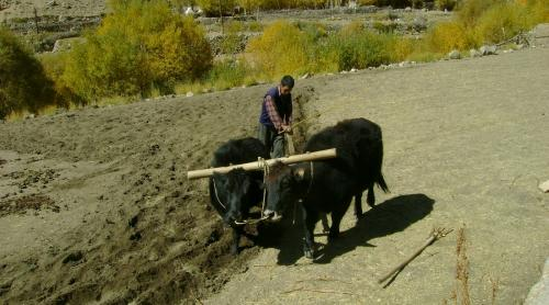 Is the rural economy driving India's recovery?