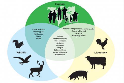वन्यजीव व्यापार से कोविड-19 जैसी महामारियों में हो सकता है इजाफा