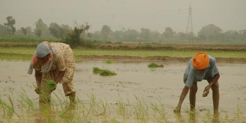 COVID-19 lockdown provides opportunity to save Punjab's declining groundwater