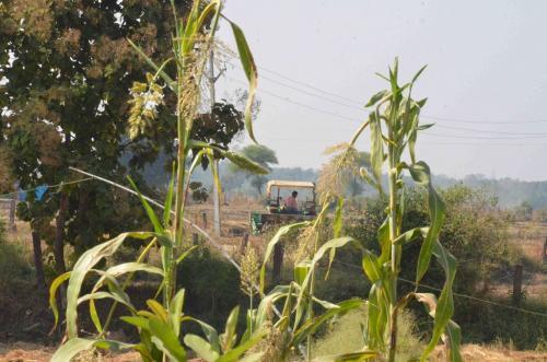 डाउन टू अर्थ तफ्तीश: किसानों को नहीं भरोसा कि दोगुनी हो जाएगी आय