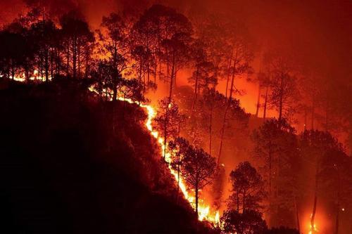 दुनिया भर में आग लगने की घटनाओं से चार हजार से अधिक प्रजातियों को खतरा