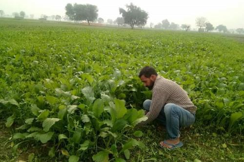 जैविक खेती का सच-2: केंद्र व राज्य सरकारें चला रही हैं कई योजनाएं, लेकिन...