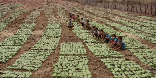How FRA helped India's forest communities during COVID-19