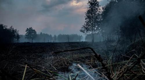 Sustainable peatland management can prevent future pandemics: Study