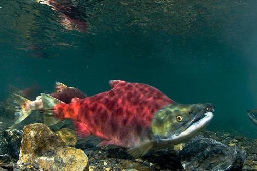 विलुप्ति के कगार पर पहुंची 100 से अधिक प्रजातियों को बचाया जा सकता है