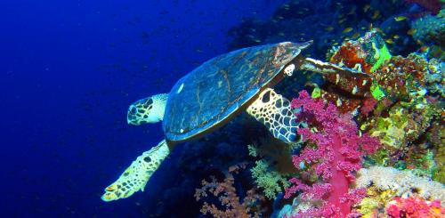 Global Eco Watch: Red Sea turtles are now mostly being born female due to climate change