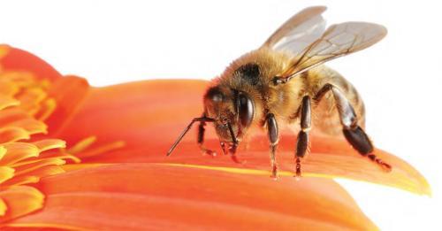 मिलावटी शहद ने मधुमक्खी पालकों की कमर तोड़ी