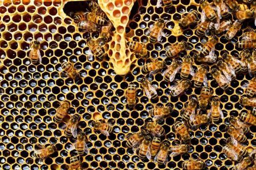 मधुमक्खी पालकों को मिल रही है आधी कीमत: सीएसई