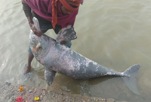 Dead dolphin thrown back into Ganga in Bihar without autopsy