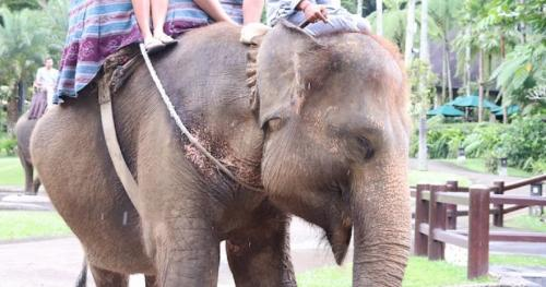 A good way to be kinder to elephants is to stop riding them