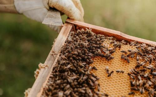 Adulteration of honey with sugar syrup most pressing threat: Beekeepers