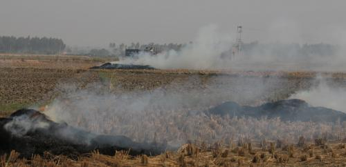Bihar cracks down on errant farmers for stubble burning