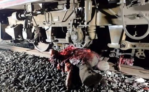 Elephant crushed by train in Odisha's Sambalpur