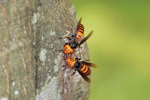 Promote insect-eating to benefit indigenous peoples