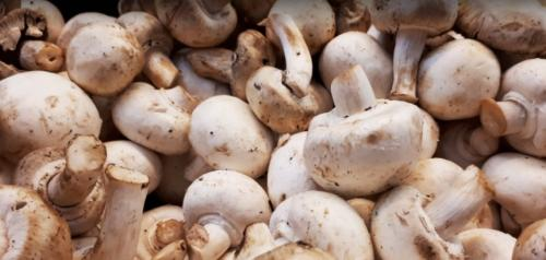 Why mushrooms should be included under ICDS and MDM scheme