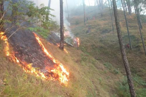Climate crisis: Uttarakhand may see forest fires round the year