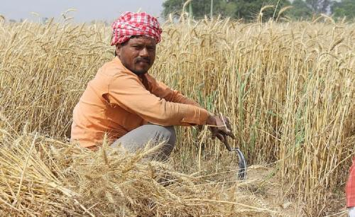 Is contract farming in India really worth it?