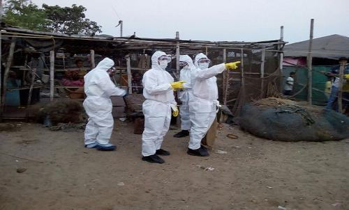 Death of 200 chickens at Odisha farm stokes bird flu fears