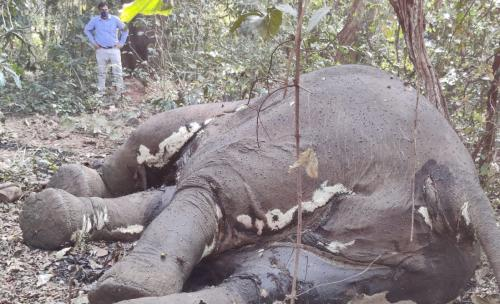 Elephant carcass with missing tusks found in Odisha's Mayurbhanj