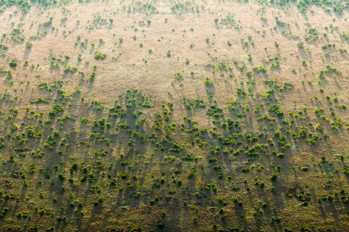 Great Green Wall: How funding can help Sahel fight desertification again