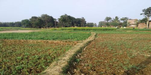 Warm winter to severely hit rabi production in Bihar: Experts